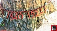 pino de la cadena rutas cercedilla sierra de guadarrama (16)