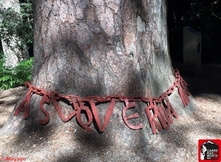 pino de la cadena rutas cercedilla sierra de guadarrama (20)